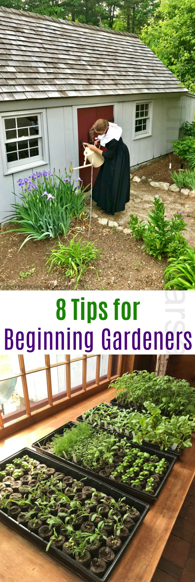 8 Tips for Beginning Gardeners