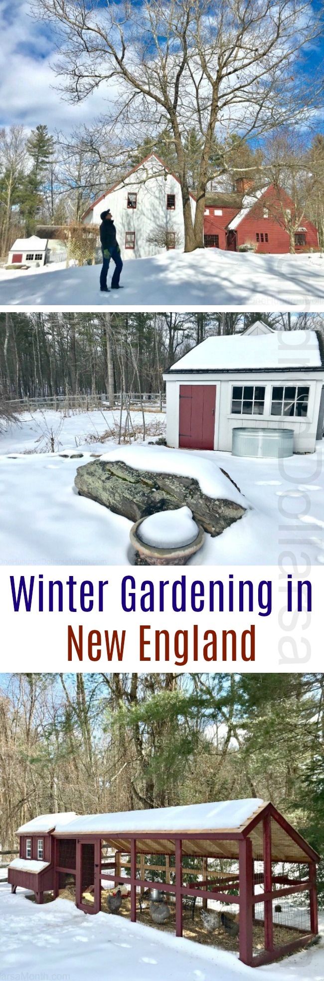 Gardening in New England – Starting Seeds, More Snow, Happy Chickens and Miss Puggle Love
