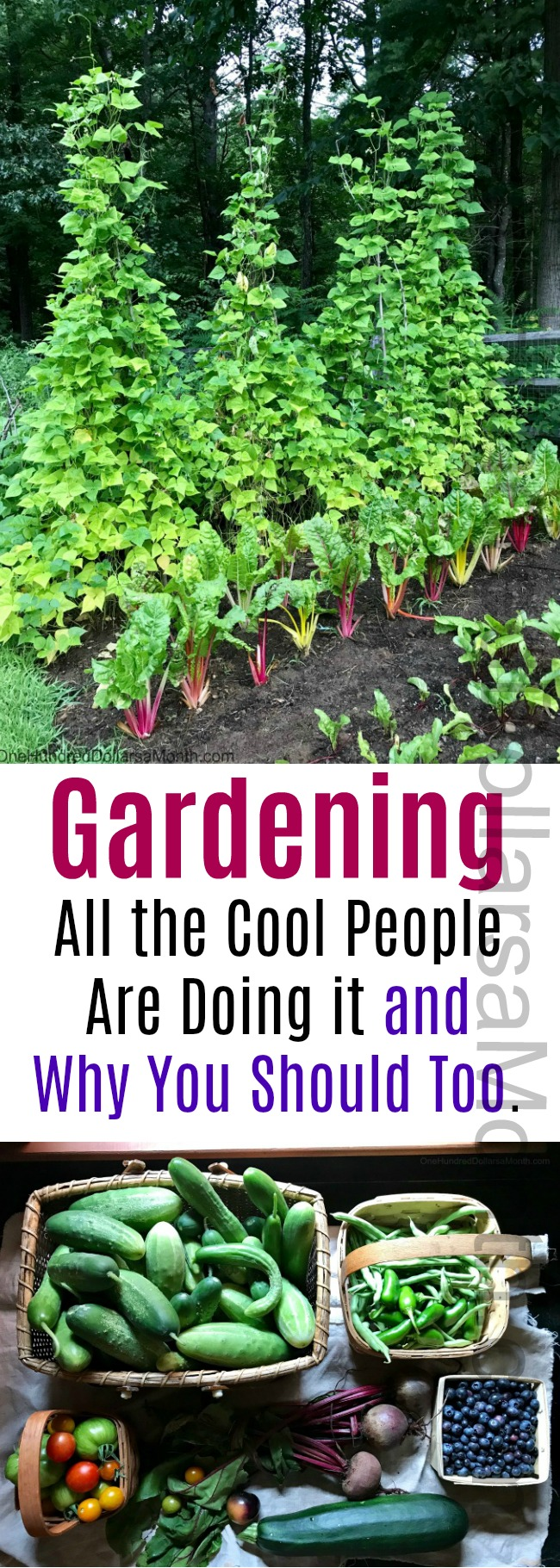 Gardening.  All the Cool People Are Doing it and Why You Should Too.