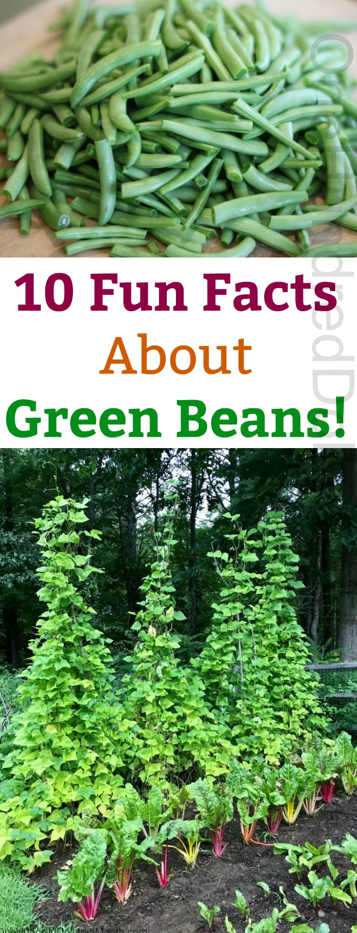 10 Fun Facts About Green Beans!