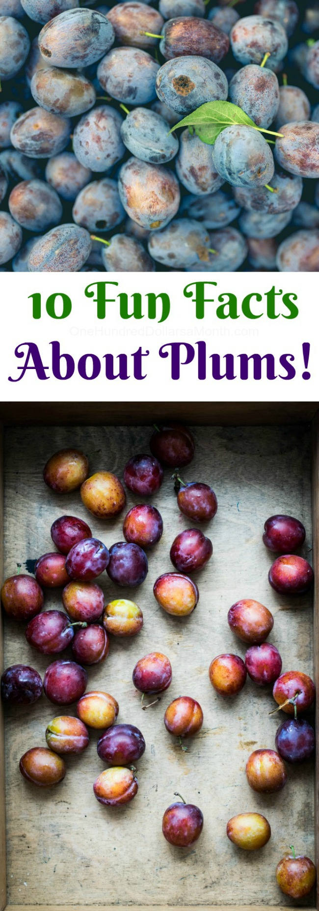 10 Fun Facts About Plums!
