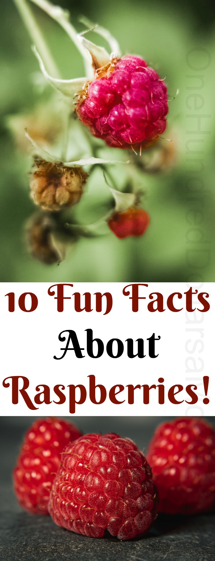 10 Fun Facts About Raspberries!