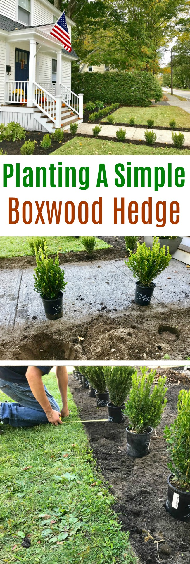 Gardening in New England – Planting A Simple Boxwood Hedge
