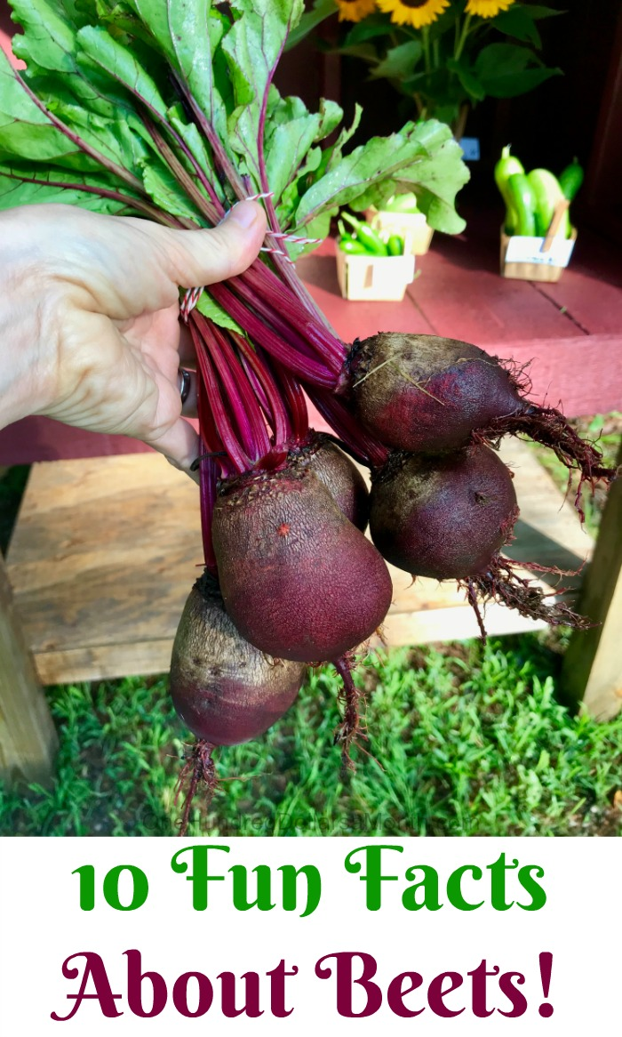 10 Fun Facts About Beets!