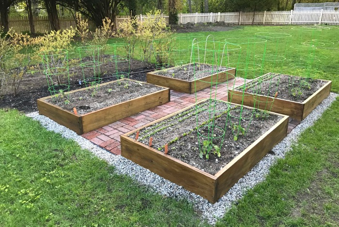 Gardening in Maine – The Raised Garden Boxes are Starting to Fill Out