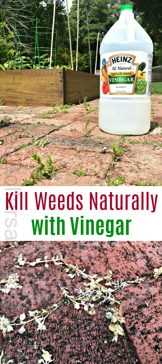 Kill Weeds Naturally with Vinegar