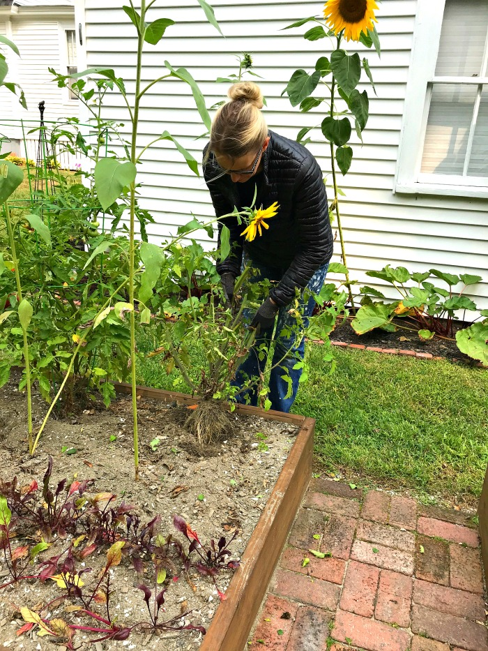 Gardening in Coastal Maine – Mid September in the Garden