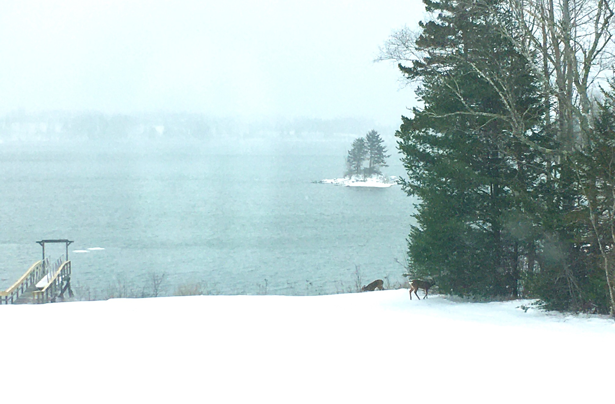A Snow Day for Mid Coast Maine