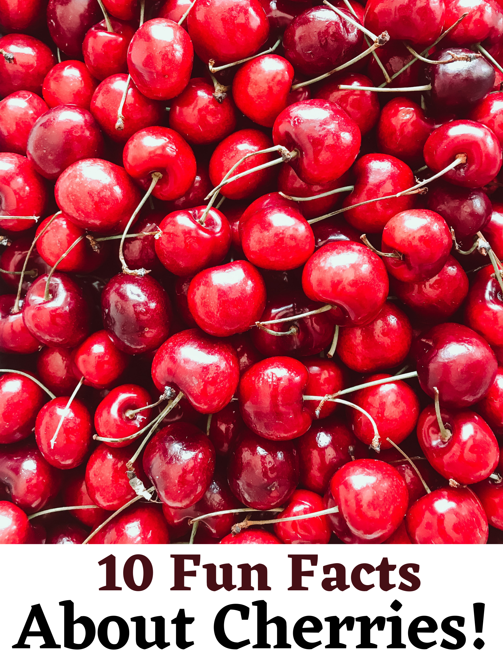 10 Fun Facts About Cherries