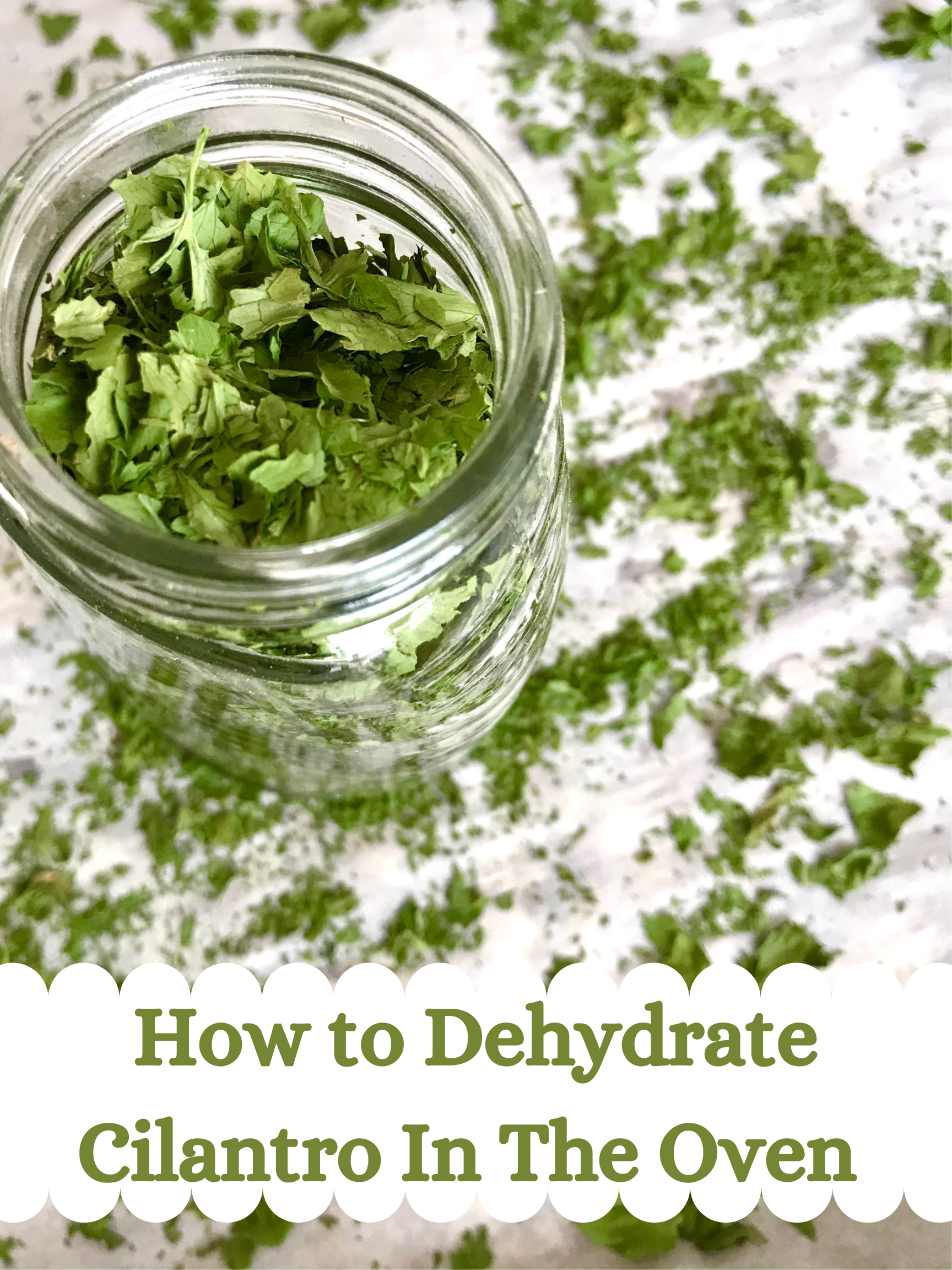 How to Dehydrate Cilantro In The Oven
